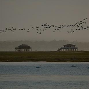 Faire le tour de l'Île aux Oiseaux