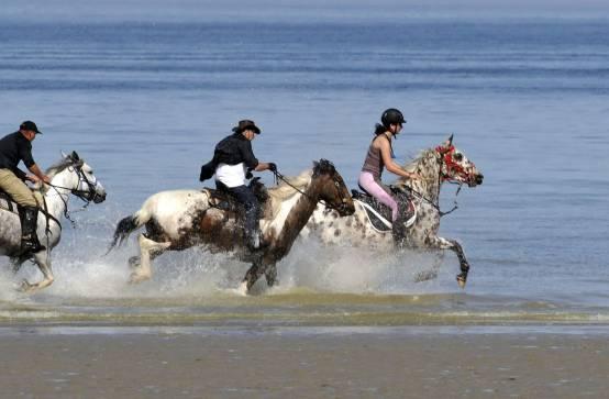Equitation l ge cap ferret - Lege cap ferret office de tourisme ...