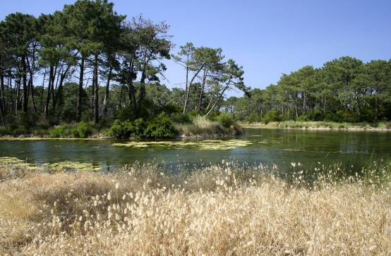Visites nature l ge cap ferret - Lege cap ferret office de tourisme ...